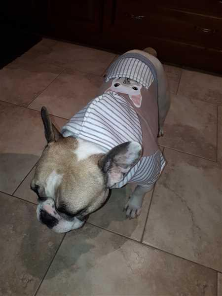 Anonymous verified customer review of French Bulldog Hoodie in Gray | Frenchie Clothing | White Frenchie dog