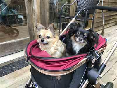 Donna Martin verified customer review of HPZ™ PET ROVER PRIME Luxury 3-in-1 Stroller for Small/Medium Dogs, Cats and Pets (Ruby Red)