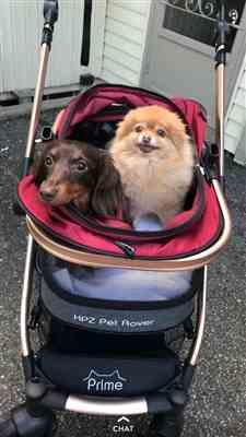 Amazon Verfied Buyer verified customer review of HPZ™ PET ROVER PRIME Luxury 3-in-1 Stroller for Small/Medium Dogs, Cats and Pets (Ruby Red)