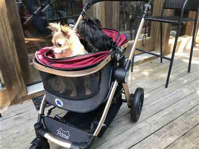 Donna verified customer review of HPZ™ PET ROVER PRIME Luxury 3-in-1 Stroller for Small/Medium Dogs, Cats and Pets (Ruby Red)
