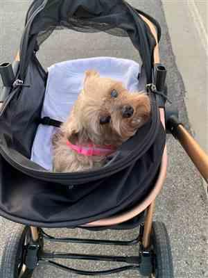 Grace verified customer review of HPZ™ PET ROVER PRIME Luxury 3-in-1 Stroller for Small/Medium Dogs, Cats and Pets (Black)
