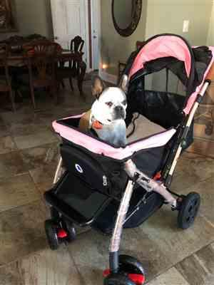 Anonymous verified customer review of HPZ™ PET ROVER XL Extra-Long Premium Stroller for Small/Medium/Large Dogs, Cats and Pets (Pink)