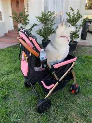 Amazon Verfied Buyer verified customer review of HPZ™ PET ROVER XL Extra-Long Premium Stroller for Small/Medium/Large Dogs, Cats and Pets (Pink)