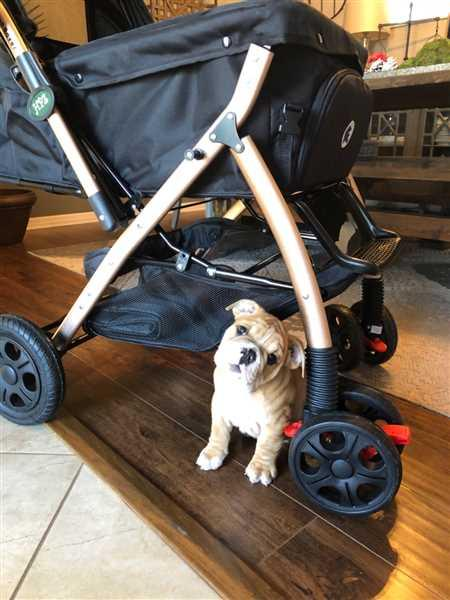 Tiffany Messer verified customer review of HPZ™ PET ROVER XL Extra-Long Premium Stroller for Small/Medium/Large Dogs, Cats and Pets (Black)