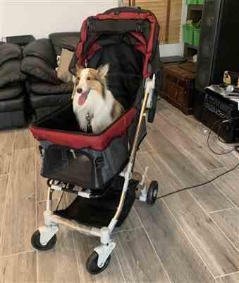 Amazon Verfied Buyer verified customer review of HPZ™ PET ROVER LITE Premium Light Travel Stroller for Small/Medium Dogs, Cats and Pets (Ruby Red)
