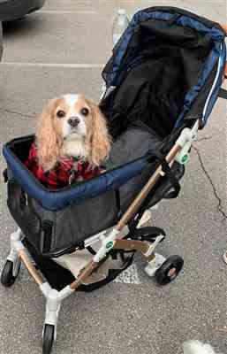 Angie I. verified customer review of HPZ™ PET ROVER LITE Premium Light Travel Stroller for Small/Medium Dogs, Cats and Pets (Navy Blue)