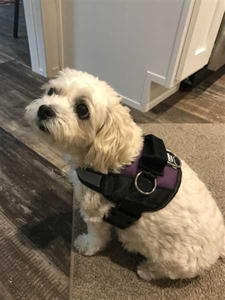 Virgene M. verified customer review of World's Best Dog Harness