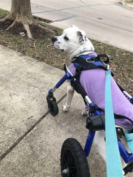 Alison D. verified customer review of World's Best Dog Harness