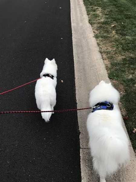 Ainsley H. verified customer review of Double Dog Leash