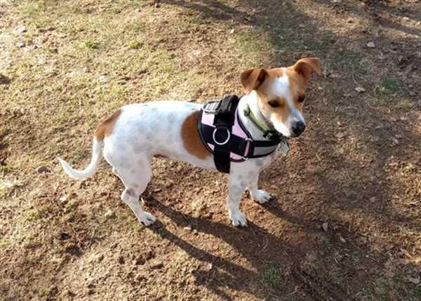 JOANNE C. verified customer review of World's Best Dog Harness