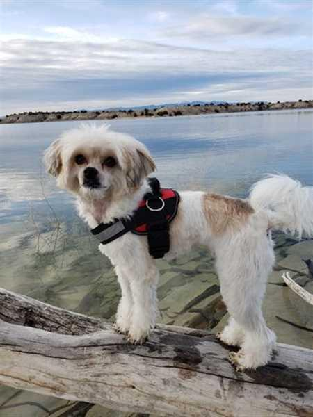 Rebekah S. verified customer review of World's Best Dog Harness