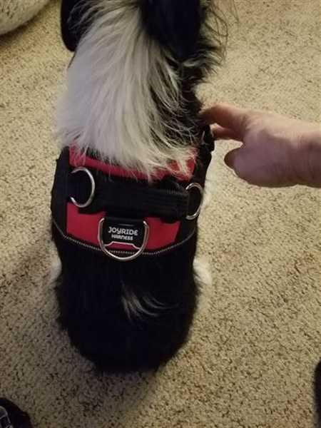 Mary S. verified customer review of World's Best Dog Harness