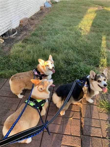 Robin C. verified customer review of Double Dog Leash