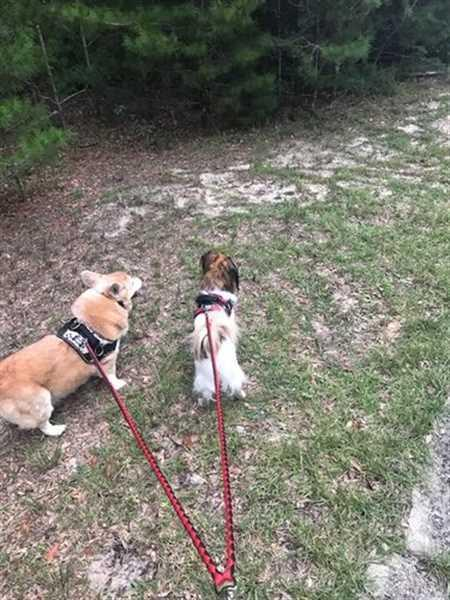 Linda T. verified customer review of Double Dog Leash