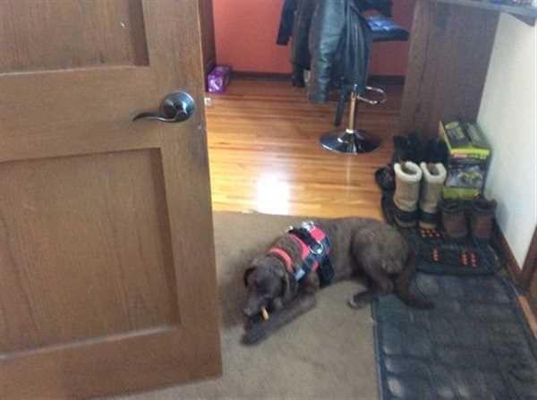 David D. verified customer review of World's Best Dog Harness