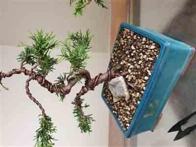 Stuart Marais verified customer review of Bonsai LECA, 2 - 4mm whole and crushed