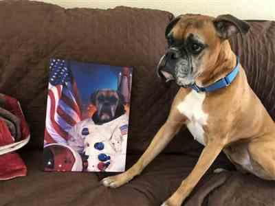 Canvasist Astrodog Pet Canvas Review
