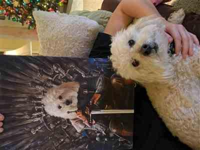 Canvasist Game Of Bones Pet Canvas Review