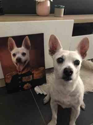 Alisha Doherty verified customer review of The Colonel Pet Canvas