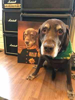 Samantha Ashley verified customer review of The Colonel Pet Canvas