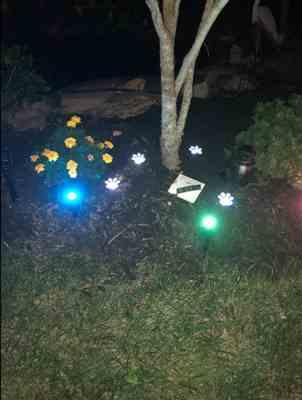 Tia Kostkowski verified customer review of Solar-Powered Paw Print Lights