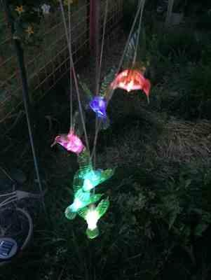 Anonymous verified customer review of Solar-Powered Dangling Hummingbird Lights