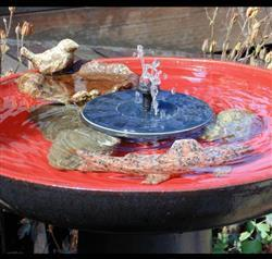 Sarah Hemmings verified customer review of Solar-Powered Easy Bird Fountain Kit - Great Addition to Your Garden!