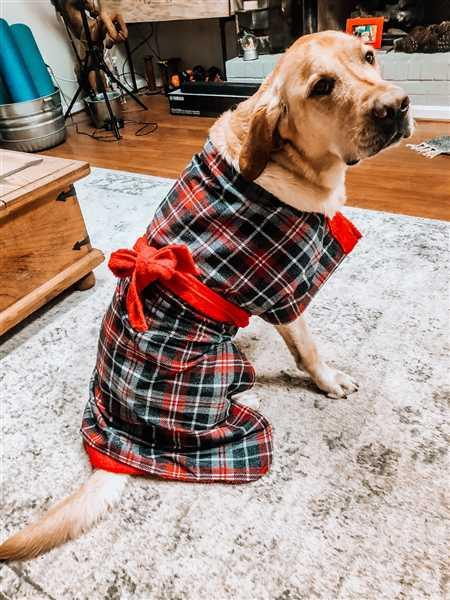 K. Suri Crowe verified customer review of Dogrobe Tartan