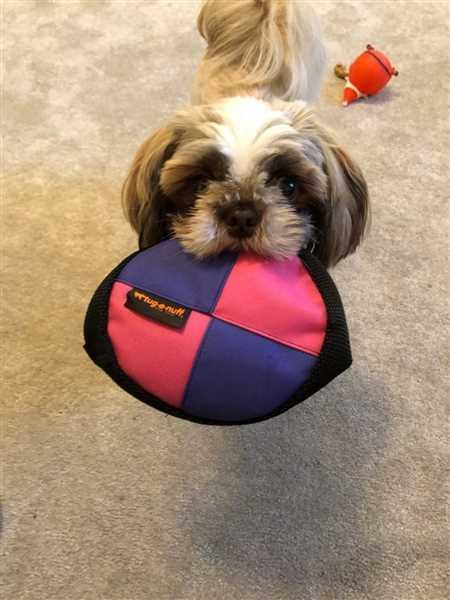 Tug-E-Nuff Dog Gear Frisbee Review