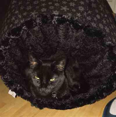 Patricia Wastman verified customer review of Cat Ball in Black Velvet and Fur with Snowflake lining