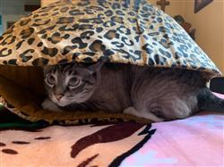 Jeannie M. verified customer review of Bed for Large Cats - Jumbo Cat Canoe in leopard fabric