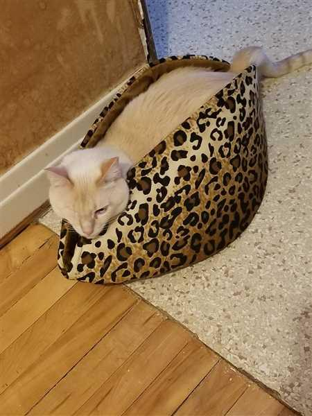Josephine Domino verified customer review of Bed for Large Cats - Jumbo Cat Canoe in leopard fabric