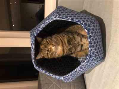 Anonymous verified customer review of Cat Ball cat bed in blue and white geometric tiles