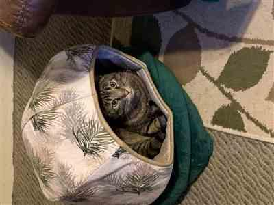 Sue Gerleman verified customer review of Cat Ball pod style pet bed in neutral feather fabric