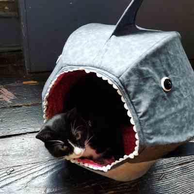 Jane E. verified customer review of Great White Shark Cat Ball Cat Bed