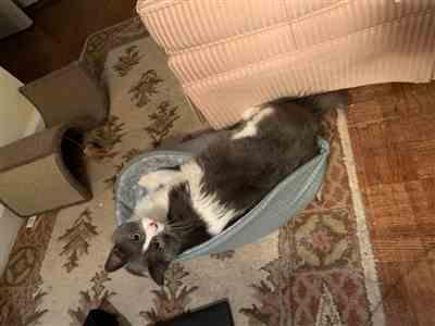 Anonymous verified customer review of Cat Canoe - Winter Snowflake and Teal Plaid Cat Bed