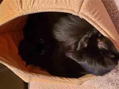 NADJA GAMBLE verified customer review of Cat Ball cat bed in harvest gold cotton calico fabrics