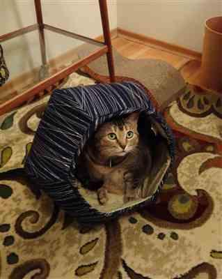 Lilac verified customer review of Cat Ball cat bed neutral navy lines with typography lining