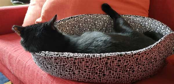 Joan A Katz verified customer review of Cat Canoe - Modern Cat Bed in Black and White Bricks