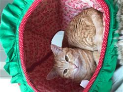 Andrea K. verified customer review of Strawberry Cat Ball - a cat bed that looks like fruit
