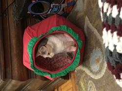 Jessica S. verified customer review of Strawberry Cat Ball - a cat bed that looks like fruit