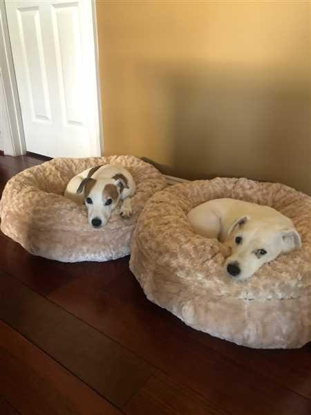 Pat Murray verified customer review of Katie Puff® Orthopedic Luxury Dog Bed