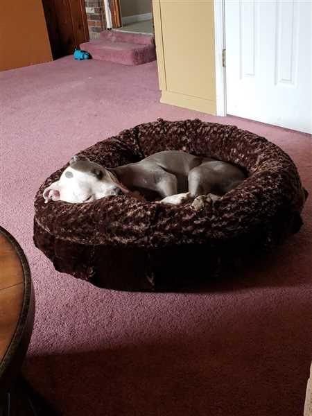 Pamela Cavins verified customer review of Katie Puff® Orthopedic Luxury Dog Bed