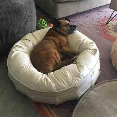 Tresa verified customer review of Ali Jewel Ortho Puff® Orthopedic Luxury Dog Bed