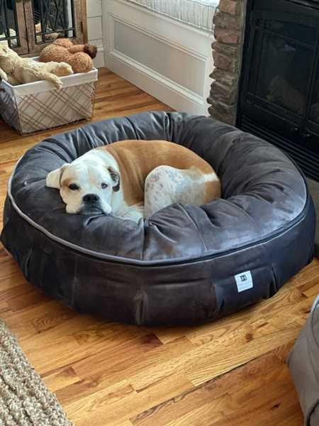 Kathleen Rowell verified customer review of Ali Jewel Ortho Puff® Orthopedic Luxury Dog Bed