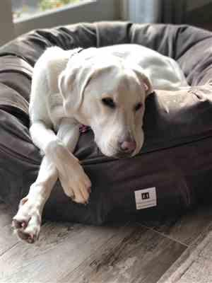 michelle russo verified customer review of Ali Jewel Ortho Puff® Orthopedic Luxury Dog Bed