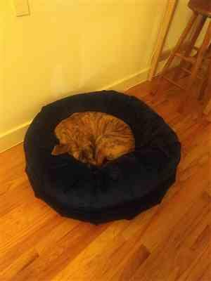 Lauren Weber verified customer review of Ali Jewel Ortho Puff® Orthopedic Luxury Dog Bed