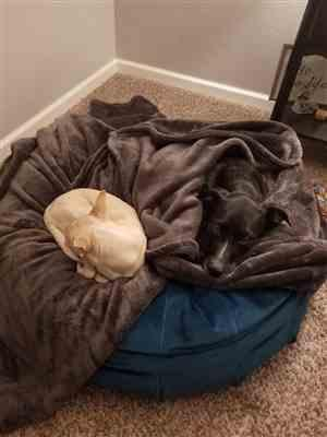 Lexie Tompkins verified customer review of Ali Jewel Ortho Puff® Orthopedic Luxury Dog Bed