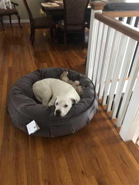 Anna Larosa verified customer review of Ali Jewel Ortho Puff® Orthopedic Luxury Dog Bed