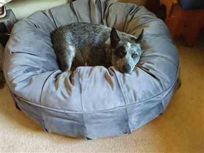 Lisa Odell verified customer review of Ali Jewel Ortho Puff® Orthopedic Luxury Dog Bed